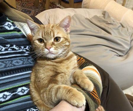猫が『身をゆだねてくる』心理5選!安心してるの?それとも構ってほしい?