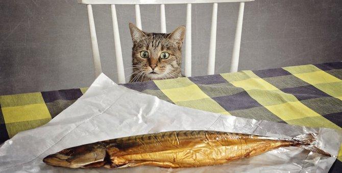 猫に焼き魚は食べさせても良い?注意する事や与え方