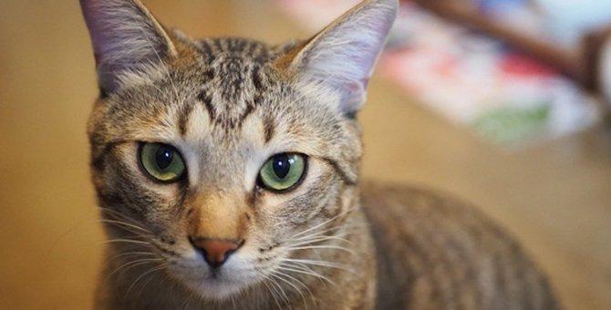 猫が緊張しているときの仕草や行動3つ