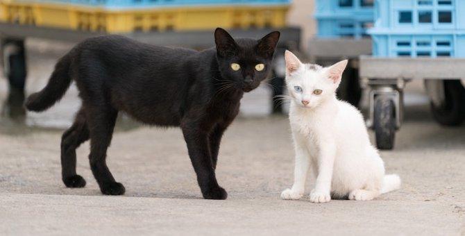 鄧小平の『白猫黒猫論』