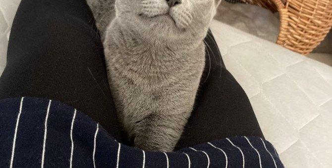 猫が『人の膝の上でくつろぐ』4つの心理