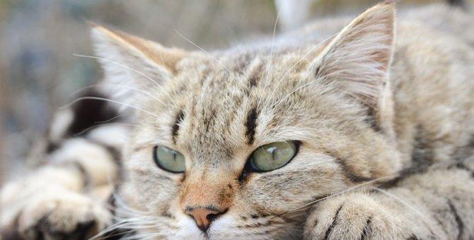 猫は焼き芋を食べても大丈夫?効果と正しい与え方