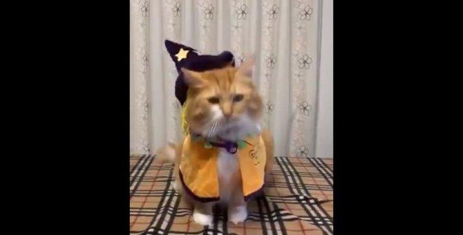 【話題】皆わくわくハロウィン!仮装して楽しみに待つ猫さんを一同称賛!