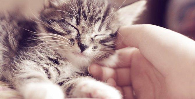 猫からの愛情気づいてる?仲良し、大好きのサイン