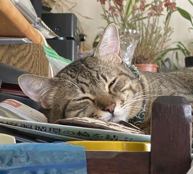 猫の「ゴロゴロ音」にまつわる雑学5つ