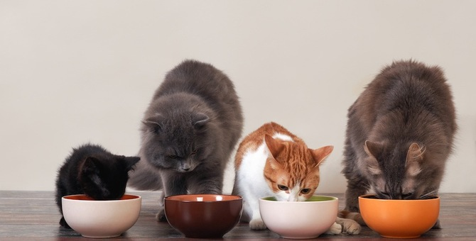 食欲旺盛な猫にできる5つの対策
