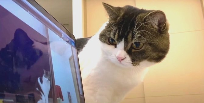 『呼ばれたニャ?』パソコンから自分の名前を呼ぶ声がして考える猫ちゃん
