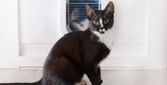 猫用ドアのおすすめ6選!その選び方と注意点とは
