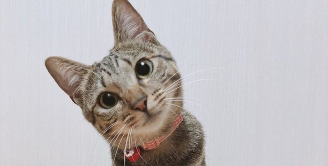 【悶絶】秒で帰りたい…子猫さんの『見送り姿』が優勝な件♡