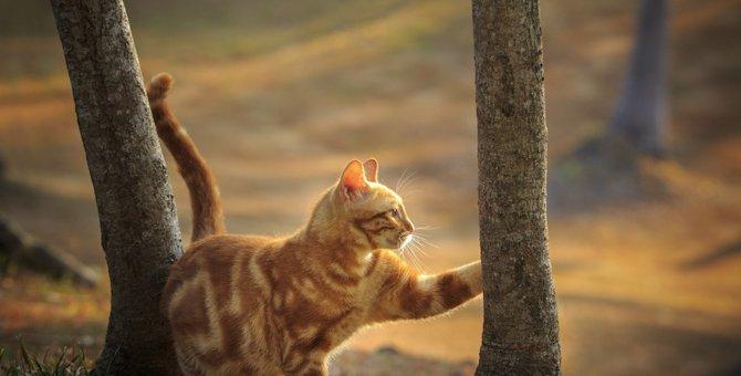 猫は運動神経抜群!身体のそれぞれの働きや役割とは