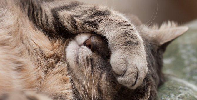 猫の寝相でわかる『体調不良のサイン』4選!状況別にすべき対応策とは?