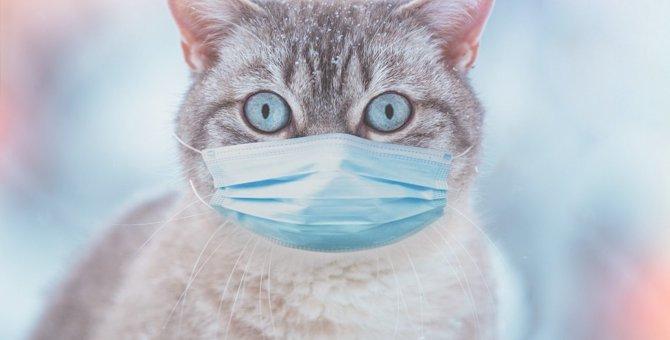 猫のおならはどんなニオイ?臭くても問題ない?