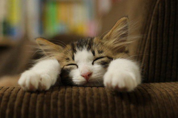 ちゃんと考えてる?猫との暮らしに必要な心構え6つ