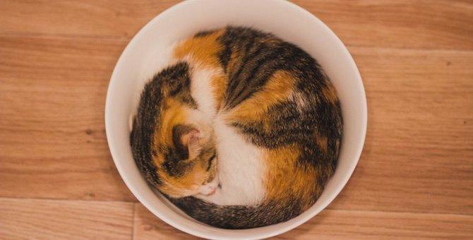 猫が体を丸めるときの心理状態5つ