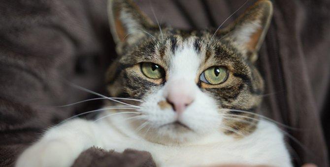 『愛情に飢えている猫』に共通する危険な兆候3つと対策