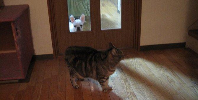 猫と犬が一緒に暮らすコツ