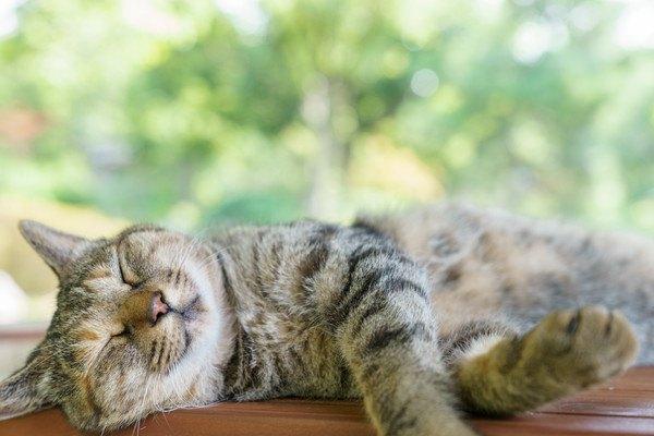 猫の最高齢は何歳?うちの子にも出来る5つの健康対策