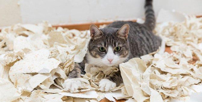 だらしない人が猫を飼うとどうなる?考えられるリスク3つ