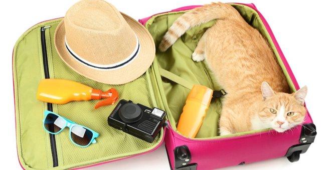 旅行中に猫は留守番できる?注意点や家に置いていけない時の対処法