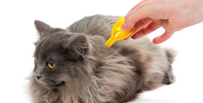 室内飼いでの猫のノミ対策に効果的な3つの方法