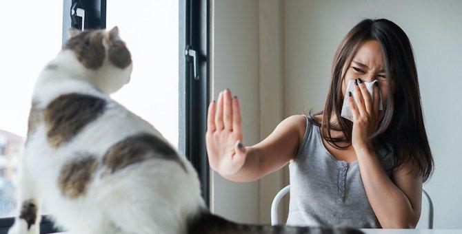 猫アレルギーはなぜおこる?後からなることも?