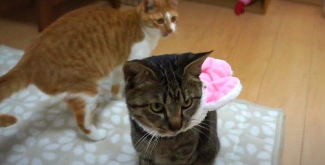 思ってたのと違う…?猫ちゃんの大きな帽子