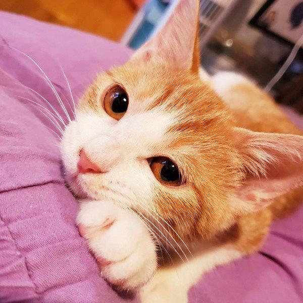 猫が飼い主の足の甲に座るのはなぜ?5つの心理