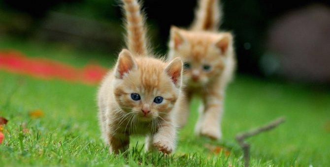 猫が飼い主に駆け寄ってくる時の心理5つ