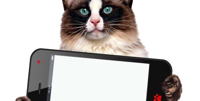 猫がデザインされたスマホケースおすすめ9選