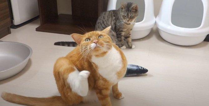 猫ちゃん達に大人気のオモチャ!大人気すぎて…
