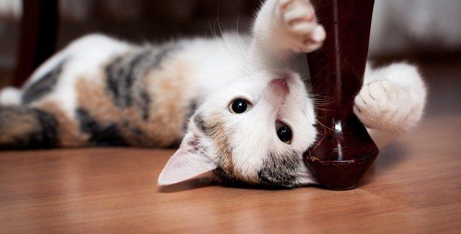 猫が前足で顔を触ってくる時の4つの気持ち