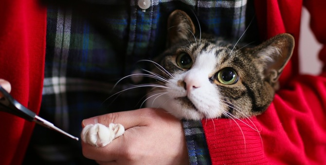 子猫の爪切りを始める時期、頻度、注意点