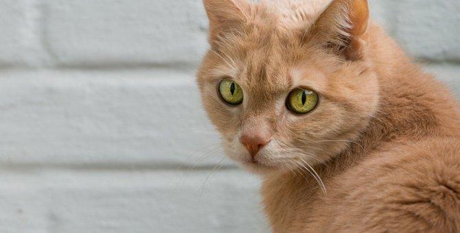 猫を飼うとできなくなる『4つのこと』 絶対に安易な気持ちでは飼わないで!