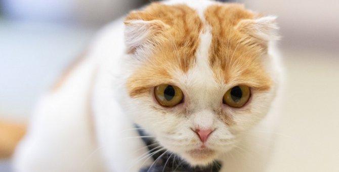 猫を飼っている家でゴキブリが増えるってホント!?増えてしまう原因とは