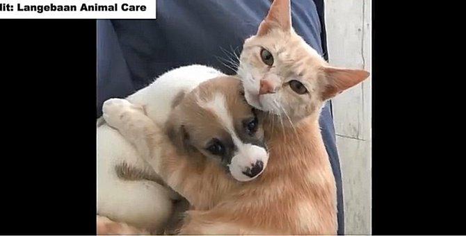 子猫を失った母猫が、孤児になった犬猫の立派なママに!