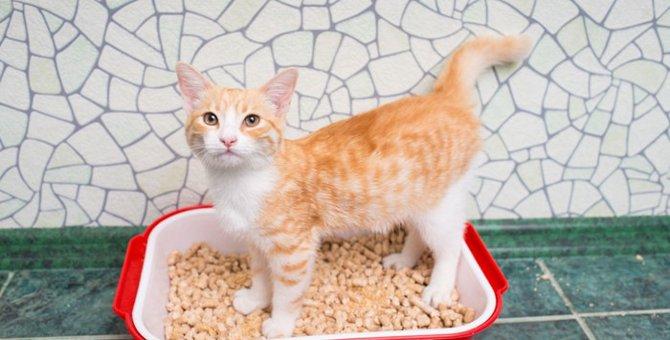猫が膀胱炎になった時の症状。タイプ別の原因から治療法まで