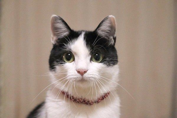 猫がごはんをくわえて移動する心理4つ!なんでその場で食べないの?