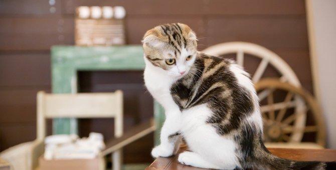 室内飼いの猫が抱えるストレス…5つの原因と解消できる方法をご紹介します