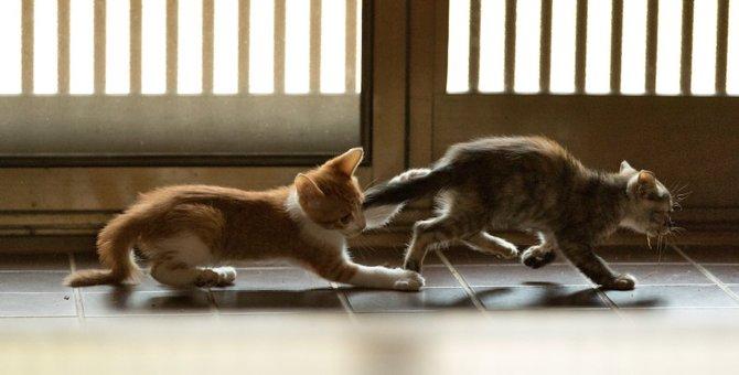 子猫が走り回る原因や対処法まで