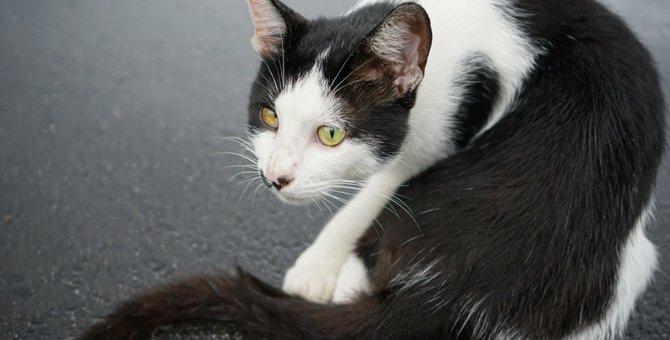 猫がクルクル回るのは、病気の可能性も…!考えられる3つの原因を解説