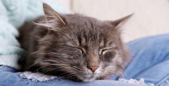 猫が大好きな飼い主の身体の場所4つ