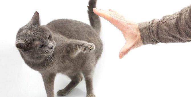 猫を遠ざけてしまう?飼い主の勘違い行動5つ