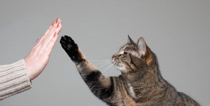 猫が『ハイタッチ』するときの気持ち4つ
