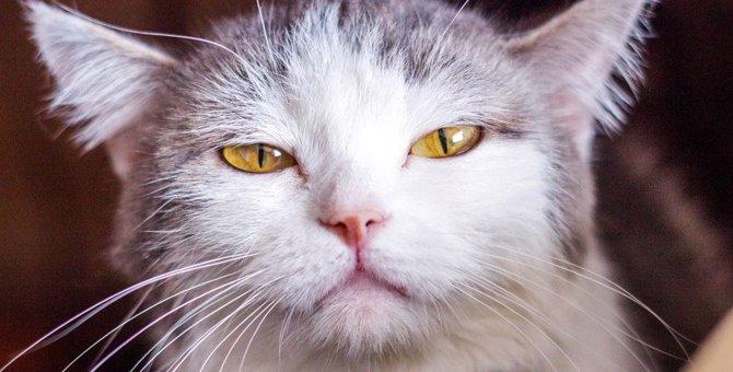 猫に塩対応される瞬間6選