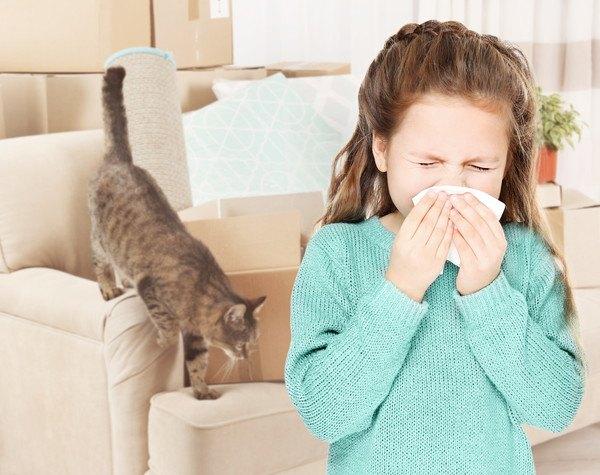 インフルエンザは猫にもうつる?飼い主が風邪をひいてしまったら。
