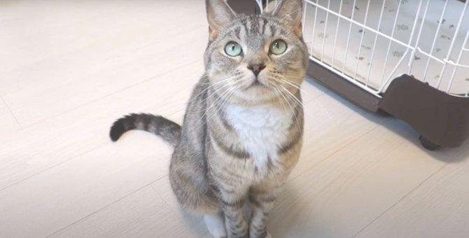 猫ちゃんが一番可愛く見えるアングルは♡?