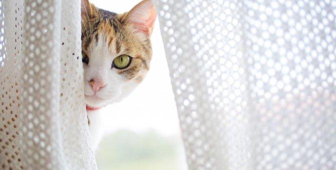 猫は宇宙からのスパイ!?人間を監視している6つの場所