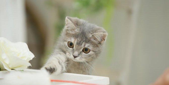 猫が1日に必要な運動量は?運動不足になっていない?