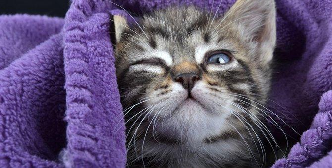 ちゃんと好かれてる?猫からの愛情表現5つ