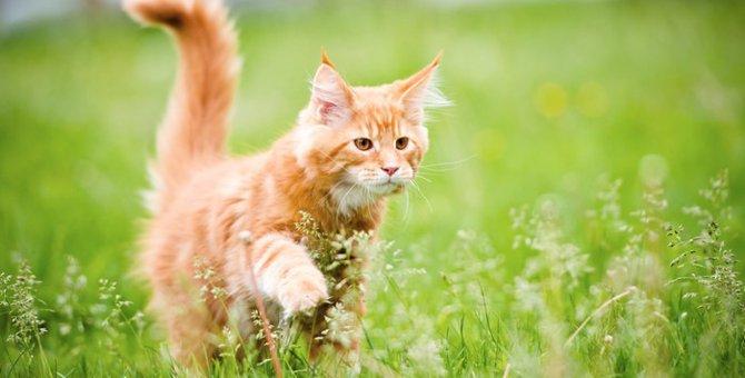 猫パルボウイルス感染症とは 恐ろしい症状と治療・予防法